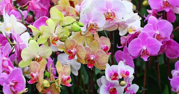 Mengunjungi Bali Orchid Garden Sanur