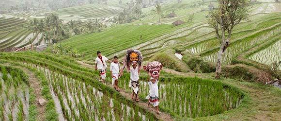 Harga Tiket Masuk Jatiluwih Objek Wisata Sawah Terasering Di Bali