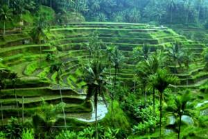 wisata ubud bali 300x200 Tempat Wisata Di Bali