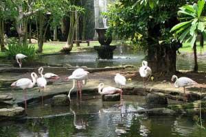 Bali Bird Park 300x200 Tempat Wisata Di Bali
