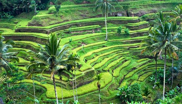 Ubud tempat wisata di Bali yang wajib dikunjungi
