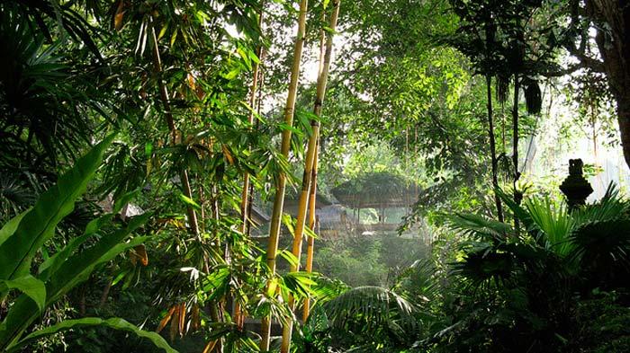 Pura Gunung Lebah Campuhan Ubud