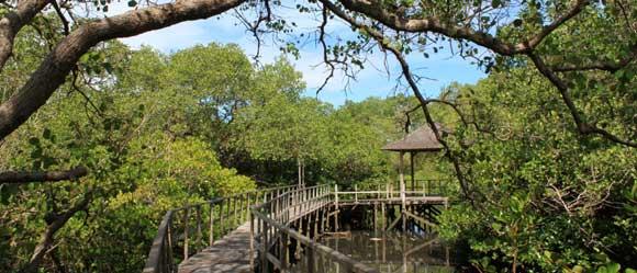 taman hutan mangrove bali