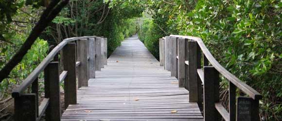 wisata hutan mangrove di bali