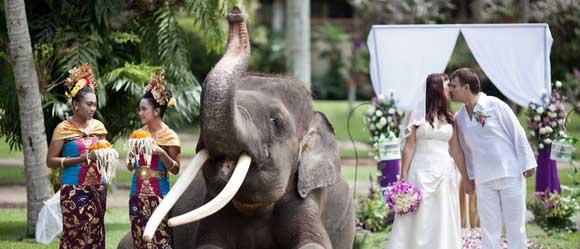 Elephant Ride Safari Wedding