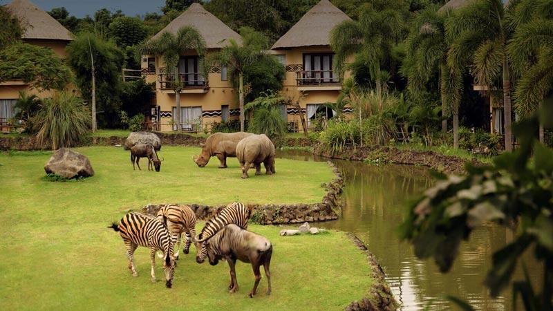 Mara River Safari Lodge Bali