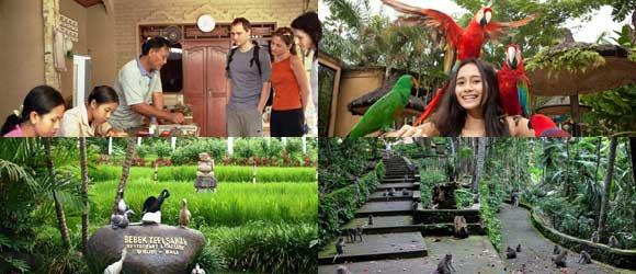 Paket Tour Bali Bird Park Half Day