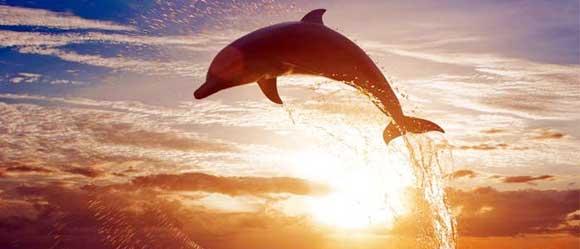 melihat lumba lumba di lovina bali