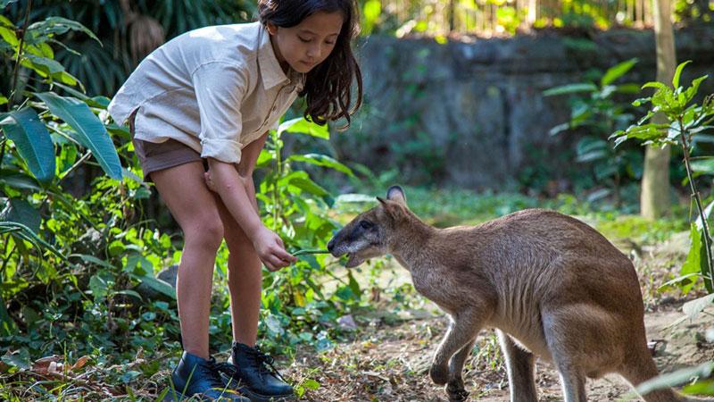 Daya Tarik Taman Rekreasi Bali Zoo