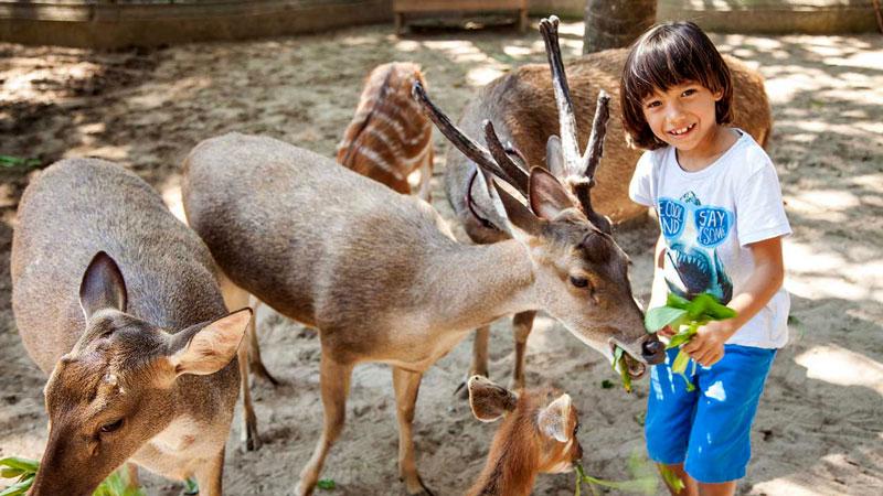 Memberi Makan Binatang Aktivitas Wisata Anak Bali