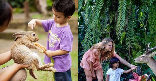 Petting Zoo Bali Singapadu Gianyar