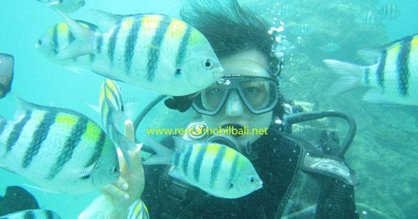 Introductory Bali Scuba Diving Tanjung Benoa Pemula