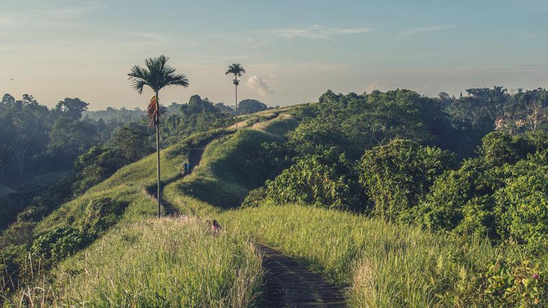 Bukit Campuhan - Tempat Wisata Ubud Bali