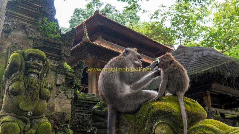 Daya Tarik Ubud Monkey Forest