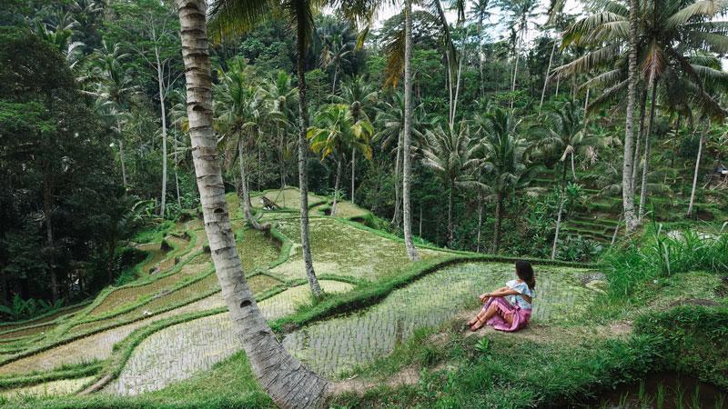 Keindahan Alam Objek Wisata Ubud Bali