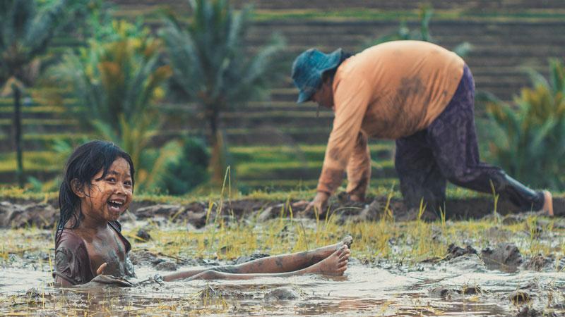 Petani Di Sawah Terasering Jatiluwih Tabanan Bali