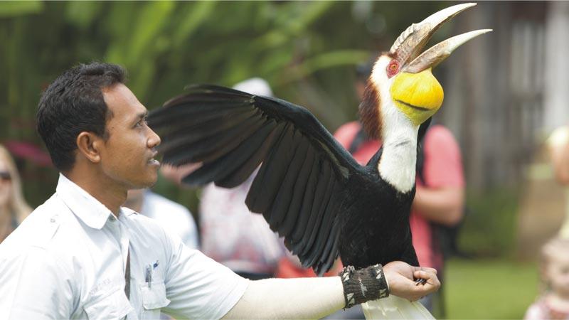 Bali Rainforest Burung Terbang - Bird Park Gianyar