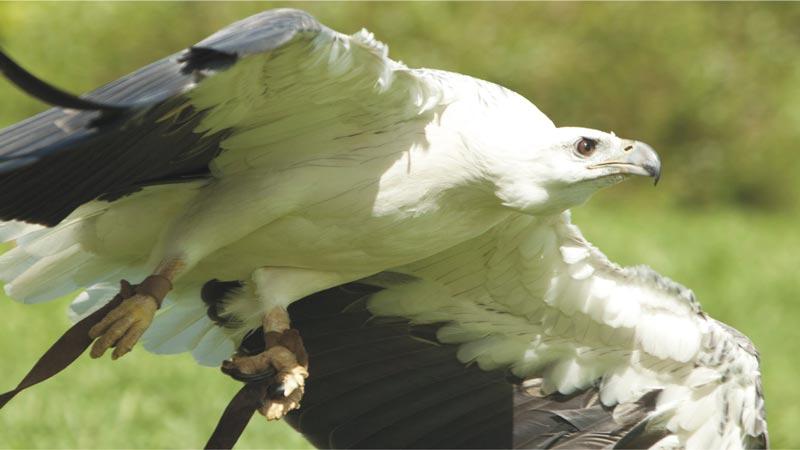 Basic Instinct - Bali Bird Park Gianyar