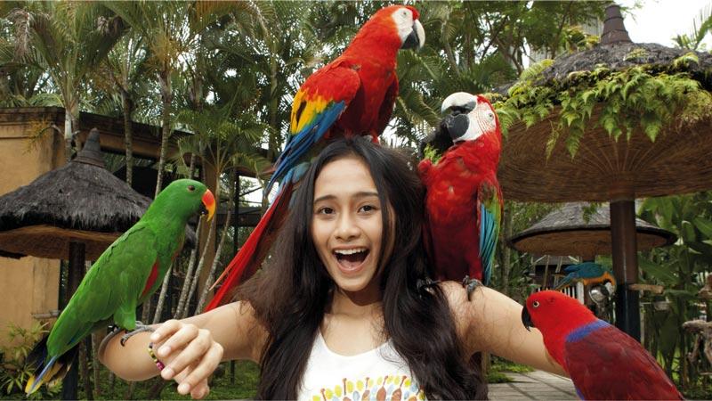 Koleksi Jenis Burung Bird Park Bali