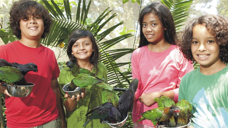 Lory Feeding - Bali Bird Park Gianyar