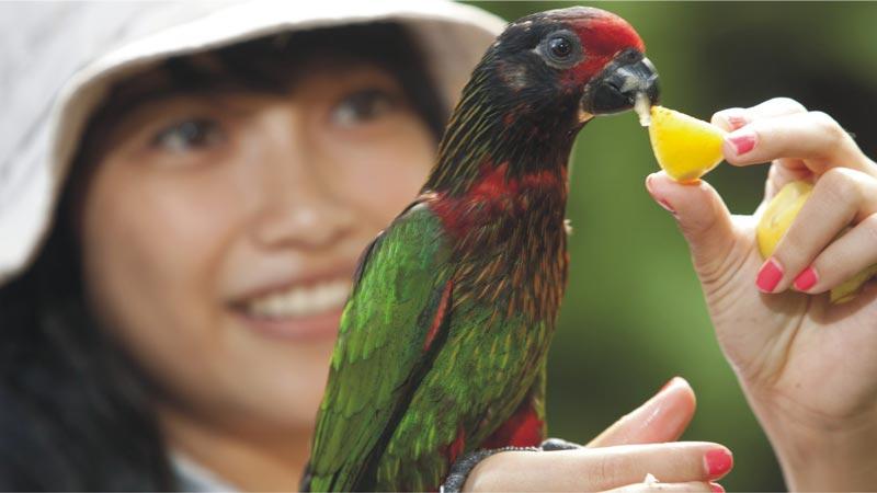 Papua Rainforest Feed - Bali Bird Park Gianyar