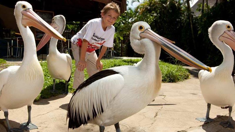 Pelican Feeding - Taman Burung Bali