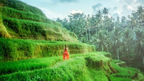 Sawah Terasering Bali