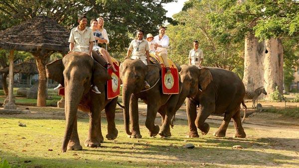 Aktivitas Naik Gajah Taman Safari Gianyar