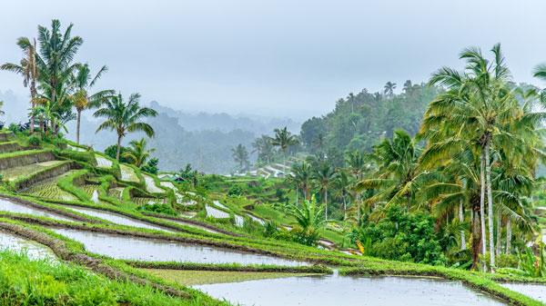 Sawah Terasering Jatiluwih Bali