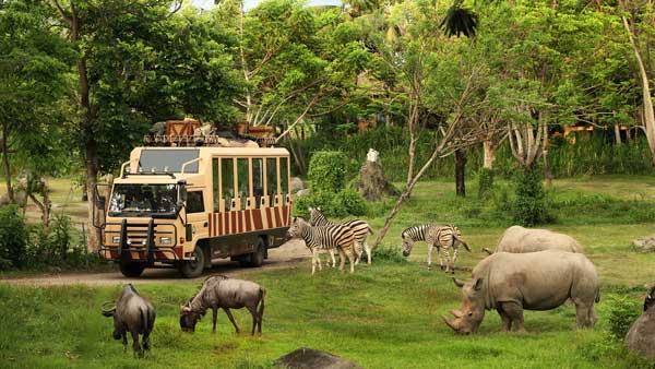 Harga Tiket Masuk Bali Safari Marine Park Domestik